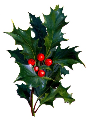 Victorian Holly flipped